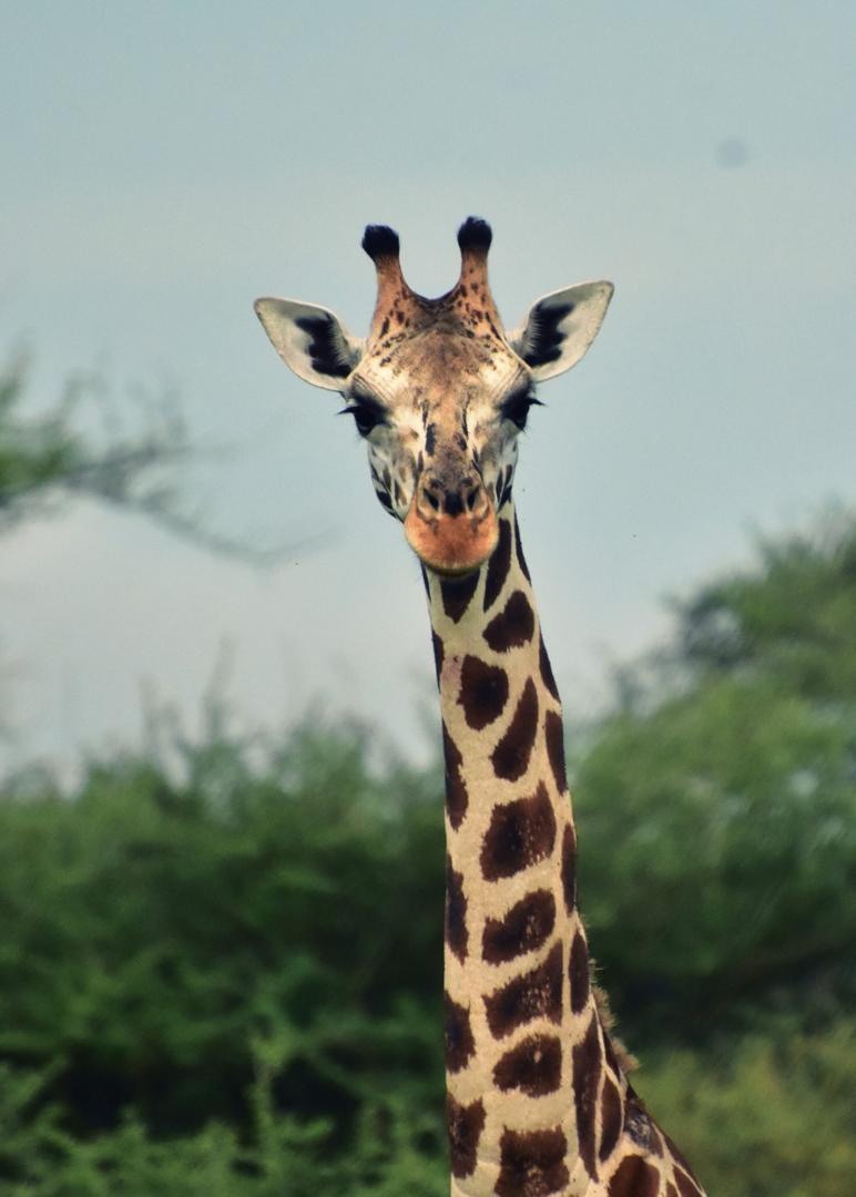 safari-viajar-a-uganda-labaafrica-photo