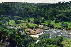 Murchison falls National Park 7