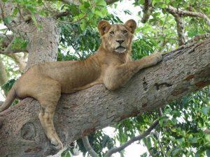 6-Jours Gorille et de la Faune safari en Ouganda