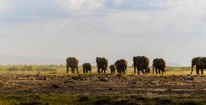 4k wallpaper african elephant animal 2622266