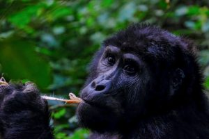 animal animal photography ape 1238272 1