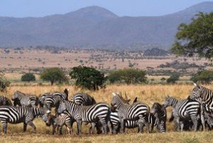 8 Days Uganda Safari