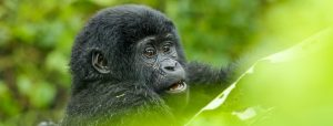10 choses incroyables à faire en Ouganda-labaafrica-photo