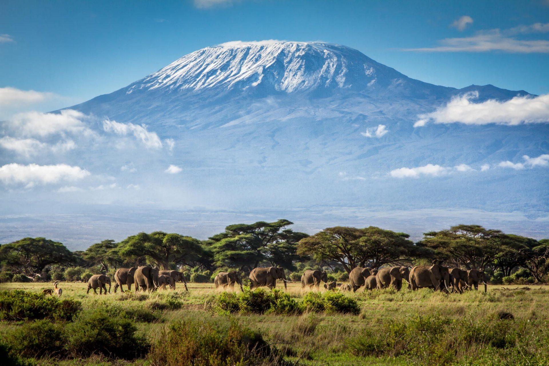 15 day Kilimanjaro and Serengeti safari