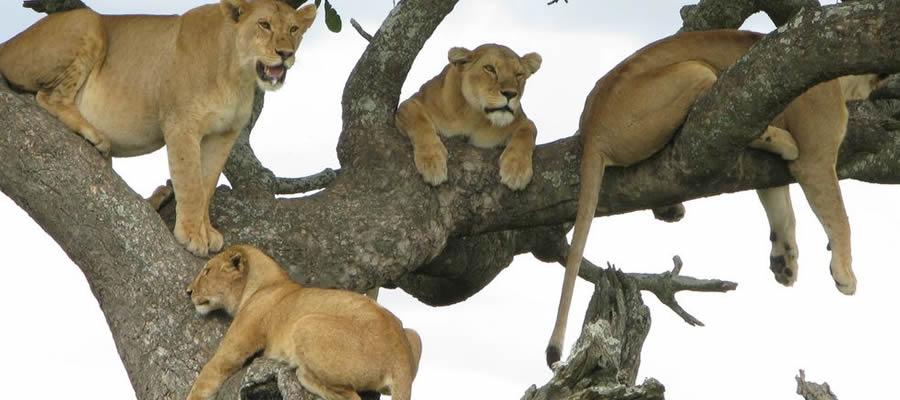 6 Days Uganda Wildlife and Cultural Safari